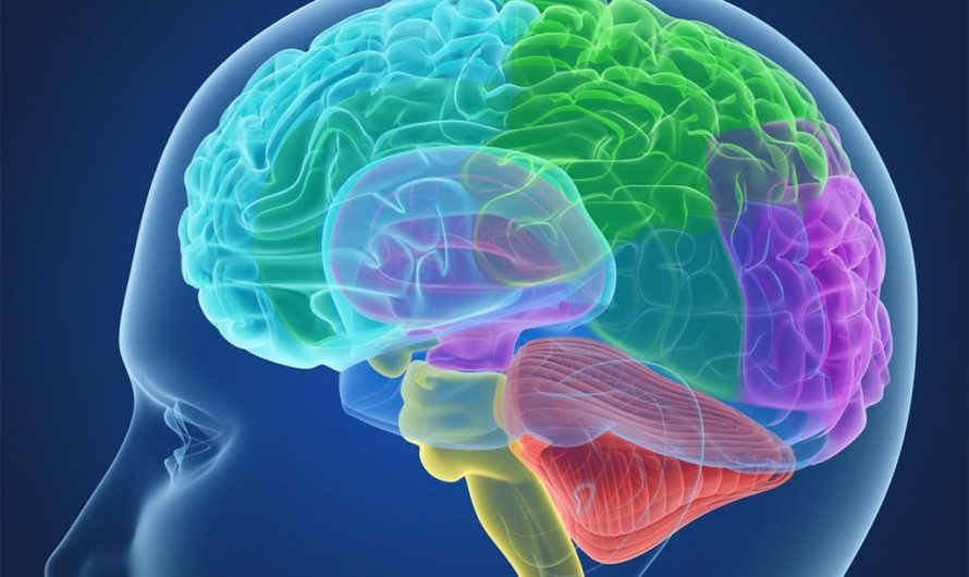 О работе мозга в общем виде