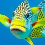 рыбы гонконга