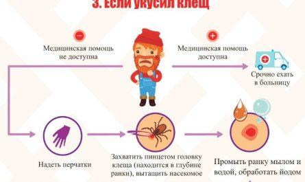 Что делать если укусил клещ