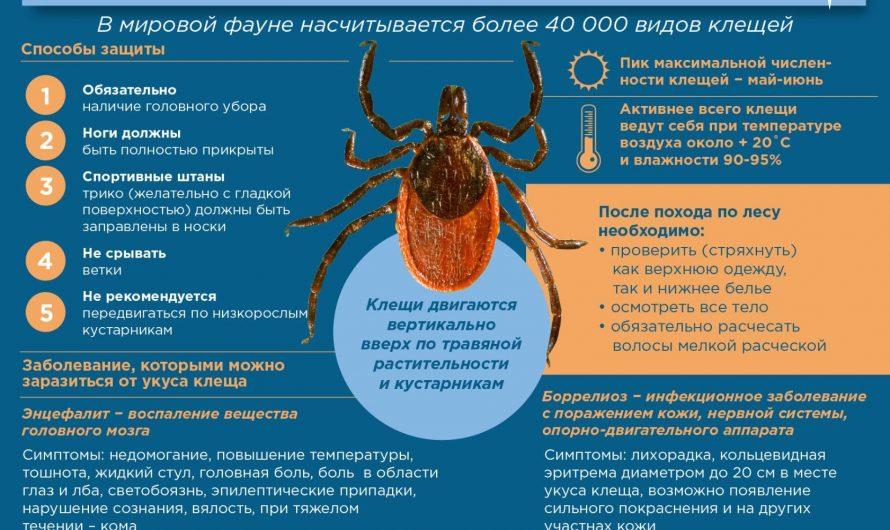 Памятка клещевые инфекции 2017